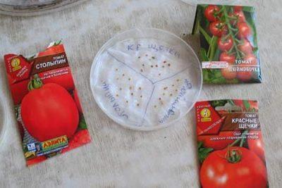 Как правильно замачивать семена помидор перед посадкой